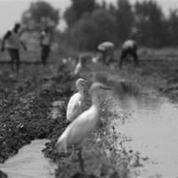 Керівництво Волинської облради звинуватили у спробі без аукціону віддати 240 гектарів землі